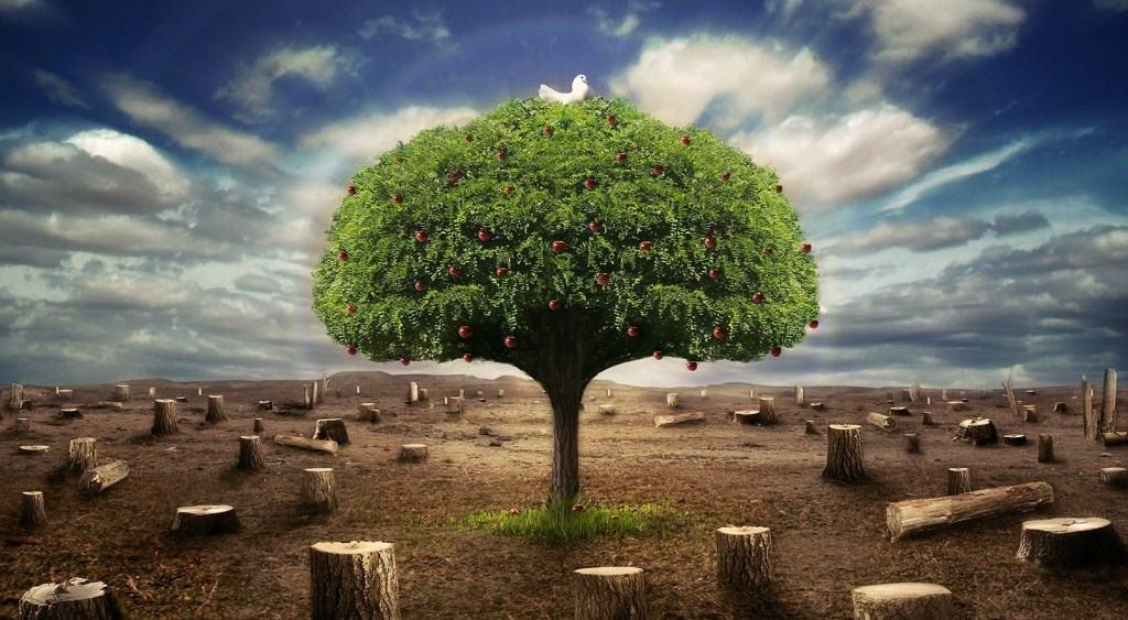 Obligaciones Que Se Heredan: El Aval Y La Fianza
