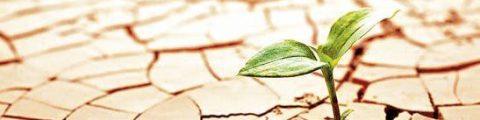 Herencias Sin Testamento: Orden De Llamamiento Y Declaración De Herederos